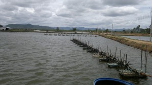 Shrimp farm near Sam Roi Yot National Park, Pranburi, Thailand